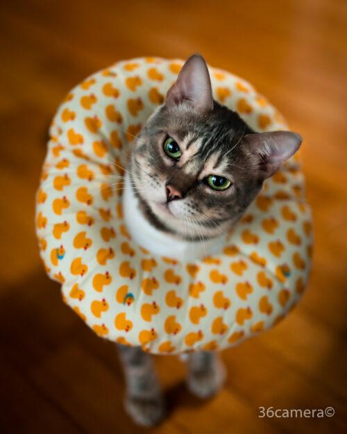 36カメラの猫レオ